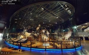 ヨシモトコレクションの大型哺乳類剥製標本群
